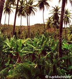 tropischer regenwald referat