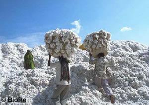Baumwolle und Naturtextilien