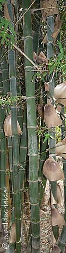 bambus. Black Bedroom Furniture Sets. Home Design Ideas